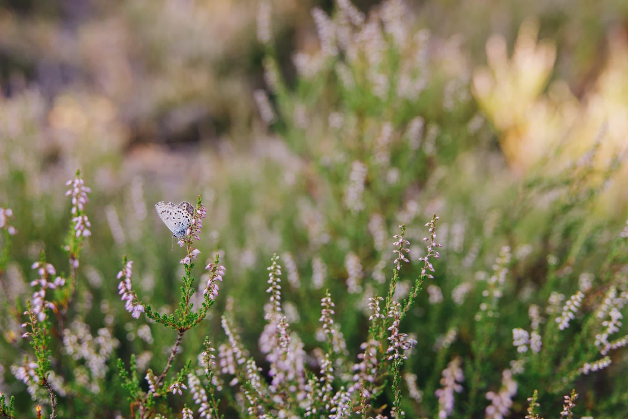 Fine-Art Print: Schmetterling
